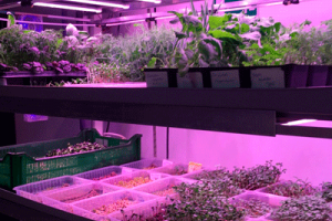 Бизнес на микрозелени. От идеи до воплощения