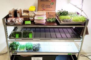 Микрозелень – суперфуд настоящего и будущего.