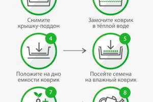Инструкция по выращиванию микрозелени