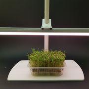 ФИТОСВЕТИЛЬНИК растущий для микрозелени