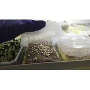На чем выращивать микрозелень: гидропоника или земля