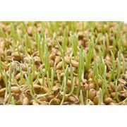 Микрозелень весной: порция здоровья на вашей тарелке